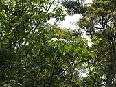 苗栗西湖:DSCF2160.JPG