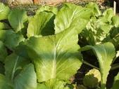 小菜園:DSCF1154.JPG