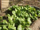 小菜園:DSCF1155.JPG