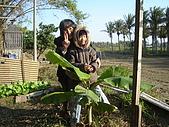 小菜園:前面是香蕉樹