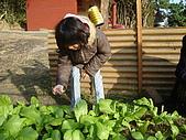 小菜園:DSC01543.JPG