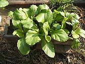 小菜園:DSCF1134.JPG
