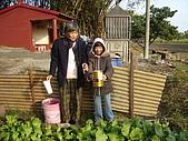 小菜園:在澆水