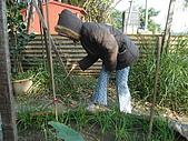 小菜園:DSC01550.JPG