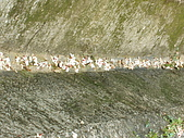 苗栗西湖:DSCF2184.JPG