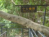 樹屋vs德記洋行:DSC01581.JPG