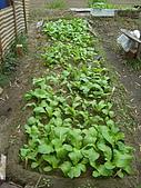 小菜園:可愛