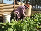 小菜園:DSCF1135.JPG