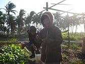 小菜園:DSC01548.JPG