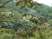苗栗西湖:DSCF2146.JPG