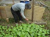 小菜園:DSC01476.JPG