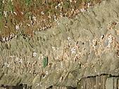苗栗西湖:DSCF2142.JPG
