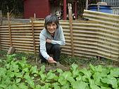 小菜園:我家的農婦