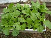 小菜園:DSC01478.JPG