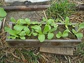 小菜園:DSC01480.JPG