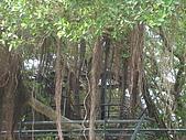 樹屋vs德記洋行:DSC01582.JPG