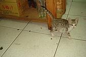 小小貓:DSC01154