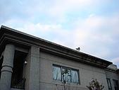 1/29花蓮沒日沒夜:DSC01795