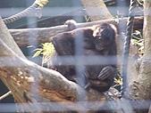 11/19 動物園台北幫同學會:100_6175