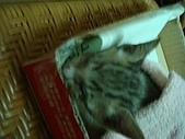 小小貓:DSC01078