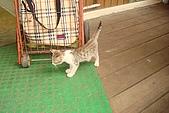 小小貓:DSC01118