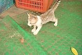 小小貓:DSC01119