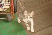 小小貓:DSC01120