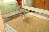 小小貓:DSC01127