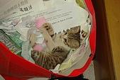 小小貓:DSC01135