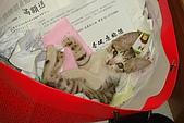 小小貓:DSC01136