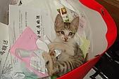 小小貓:DSC01137