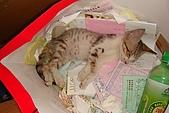 小小貓:DSC01140
