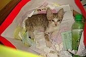 小小貓:DSC01141
