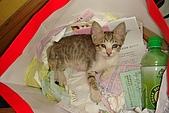 小小貓:DSC01142