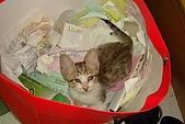 小小貓:DSC01143