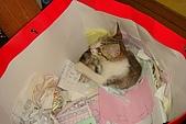 小小貓:DSC01144