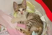 小小貓:DSC01147