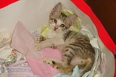 小小貓:DSC01148