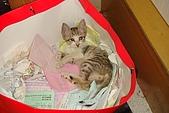小小貓:DSC01149