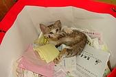小小貓:DSC01150