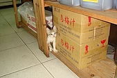小小貓:DSC01153
