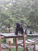 壽山動物園半日遊:CAM01778.jpg