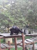 壽山動物園半日遊:CAM01781.jpg