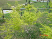 098年04月24日台南都會公園:台南仁德都會公園_87.JPG