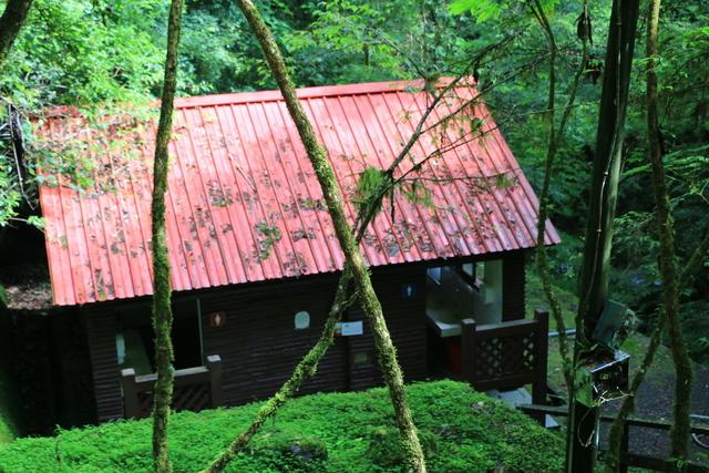 103年07月12日第廿七次露營-達觀山自然保護區巨木群:IMG_5094.JPG