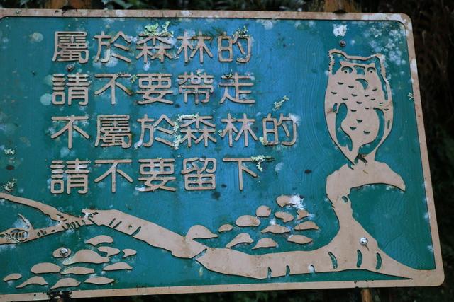 103年07月12日第廿七次露營-達觀山自然保護區巨木群:IMG_5238.JPG