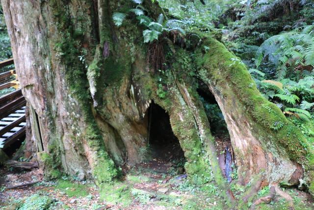 103年07月12日第廿七次露營-達觀山自然保護區巨木群:IMG_5093.JPG