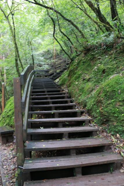 103年07月12日第廿七次露營-達觀山自然保護區巨木群:IMG_5141.JPG
