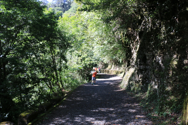 103年07月12日第廿七次露營-達觀山自然保護區巨木群:IMG_5046.JPG
