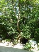 富陽自然生態公園:P1140265.jpg